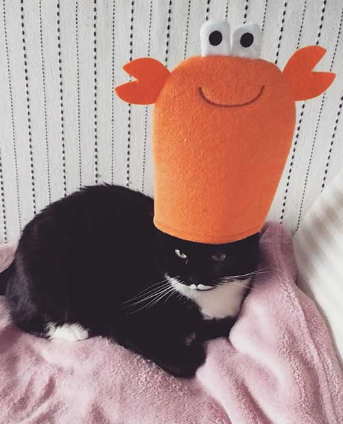 Halloween come vestirsi - Isotta Catfluencer