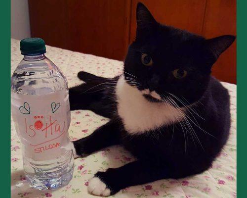 acqua evian ferragni isotta catfluencer
