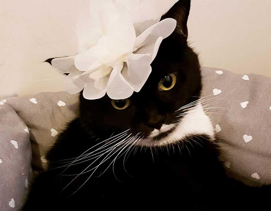 moda floreale - Isotta Catfluencer
