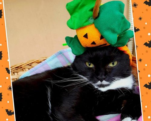 look per le feste - halloween - isotta catfluencer