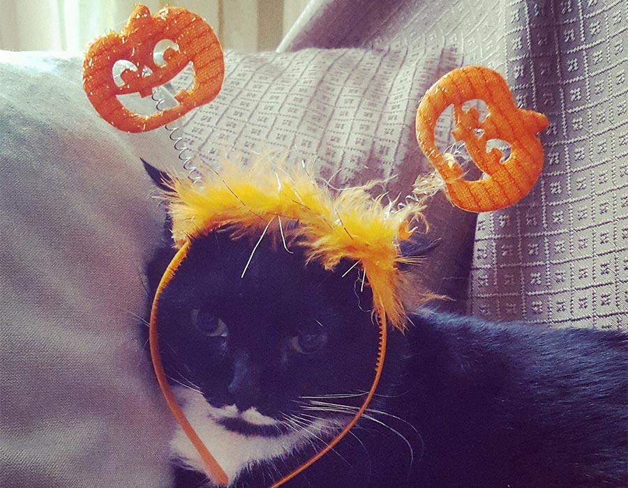 look per halloween - isotta catfluencer