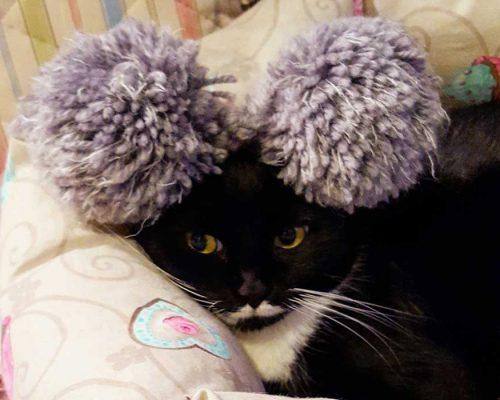 storie di gatti - isotta catfluencer