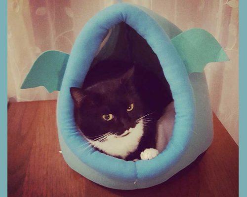 vita da gatta - la siesta del felino - Isotta Catfluencer