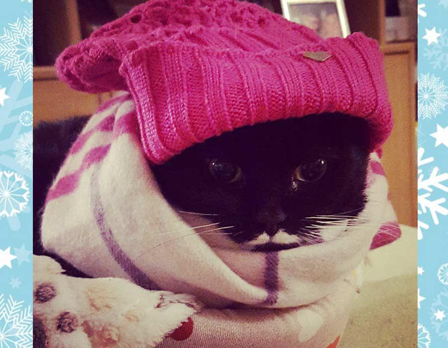 il gatto in inverno - Isotta Catfluencer