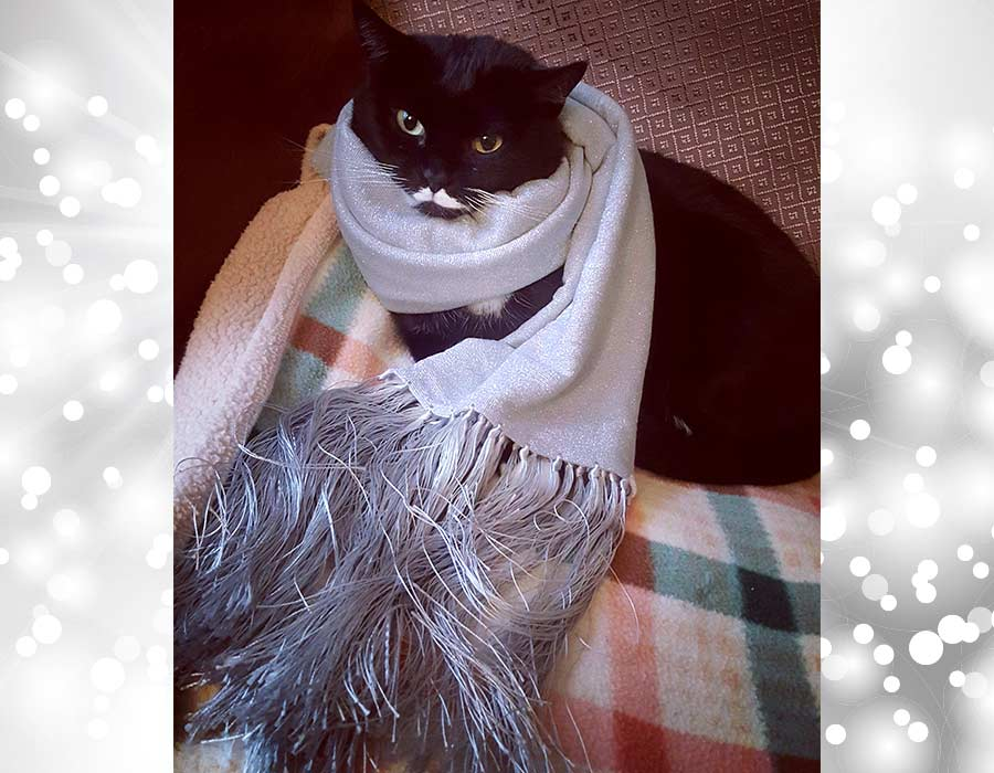 pensiero positivo - Isotta Catfluencer