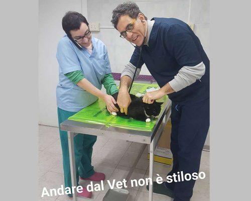 controllo annuale veterinario gatto