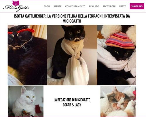 intervista Miciogatto.it ad isotta catfluencer