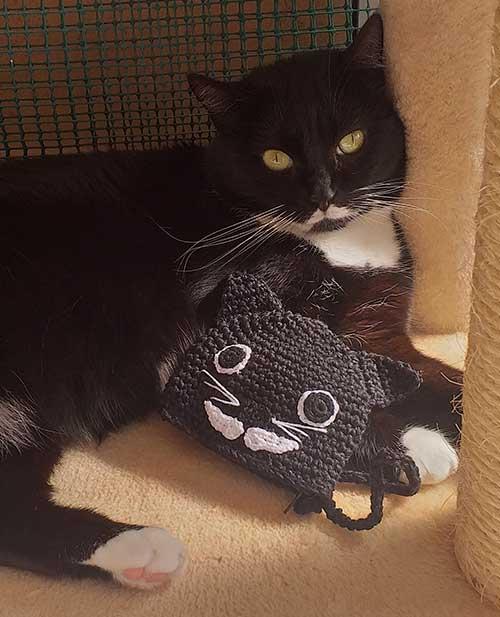 porta monete borsetta borsellino gatto isotta catfluencer