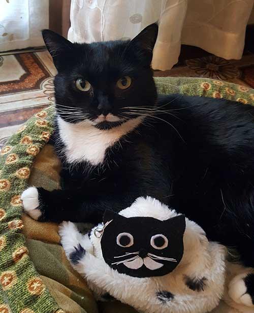 accessori a forma di gatto - Isotta catfluencer