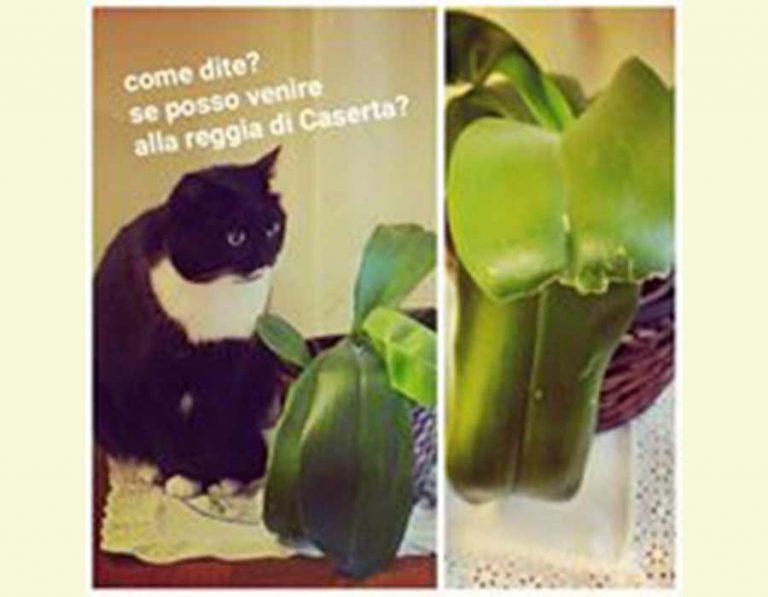 vita da artista completa - gatta Isotta catfluencer
