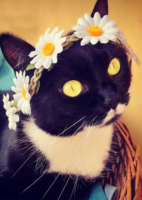 fashion cat - hippie cat - isotta Catfluencer
