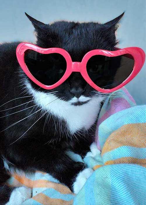 isotta catfluencer - Gatta Fashion