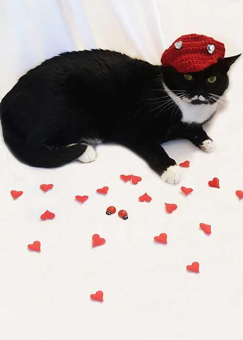 gatto a san valentino