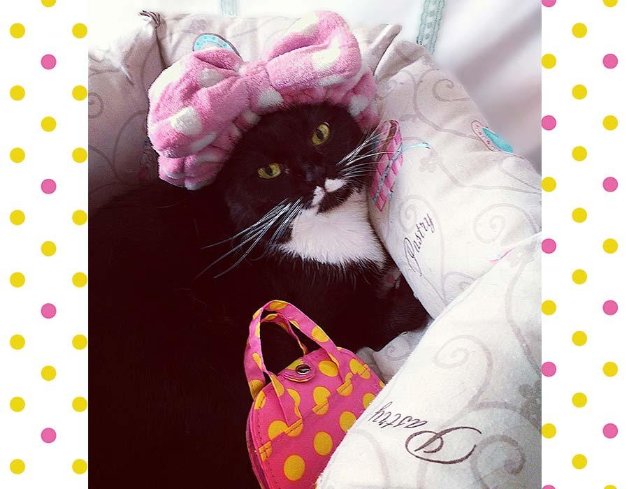 Tendenze moda - Una gatta a Pois Accessori ed Abbigliamento a Pois - Isotta Catfluencer
