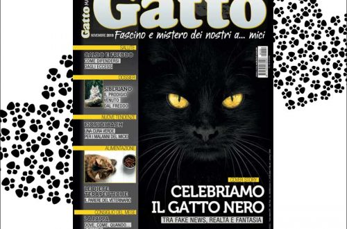 Gatto Magazine Isotta Catfluencer