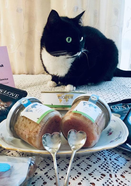 Migliori marche di cibo per gatti - Isotta Catfluencer