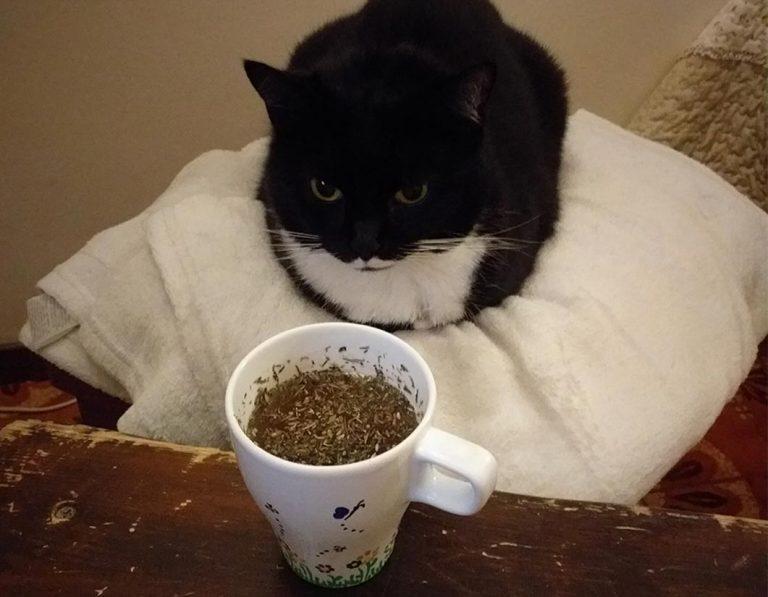 Raffreddore gatti cure naturali -Isotta catfluencer