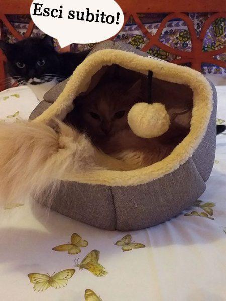 lettino gatto - cuccia design gatto - Isotta Catfluencer