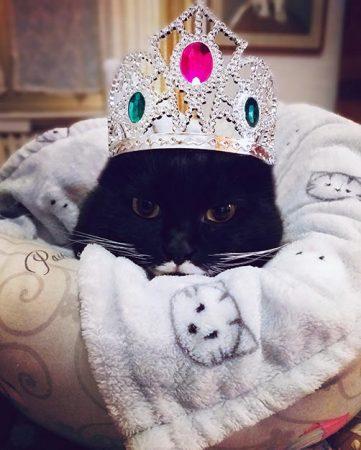 Isotta Catfluencer Blog gatti