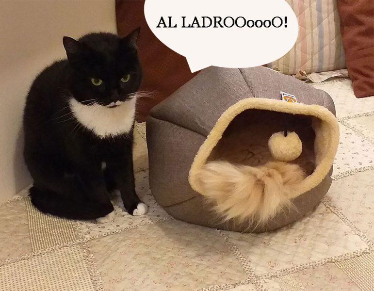 lettino-gatto-cuccia-gatto-design-Isotta-Catfluencer-blog--web.6